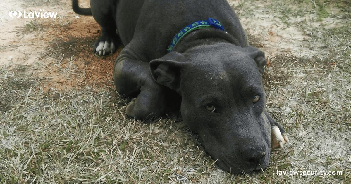 Pay It Forward – Bullock County Humane Society